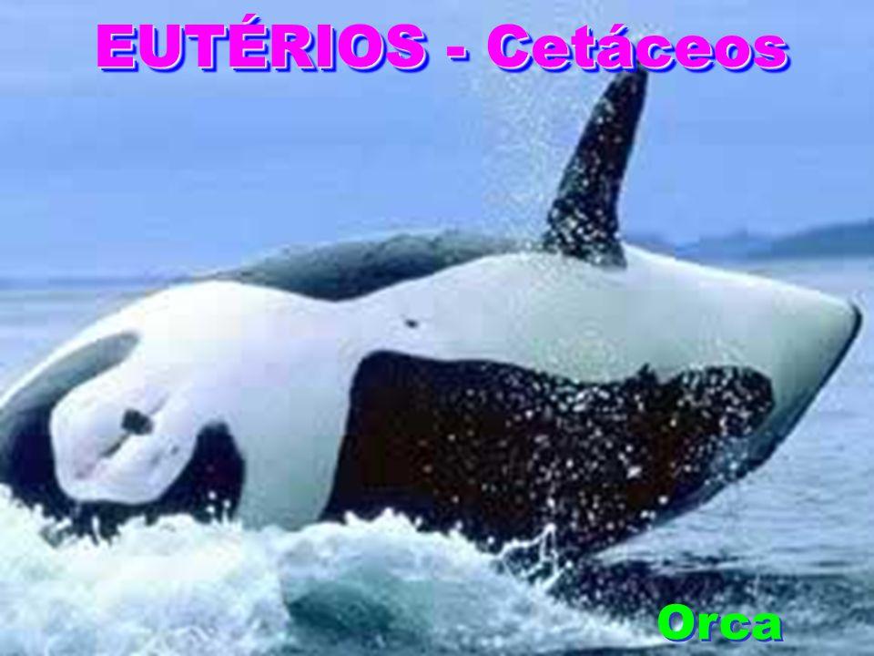 EUTÉRIOS - Cetáceos Orca