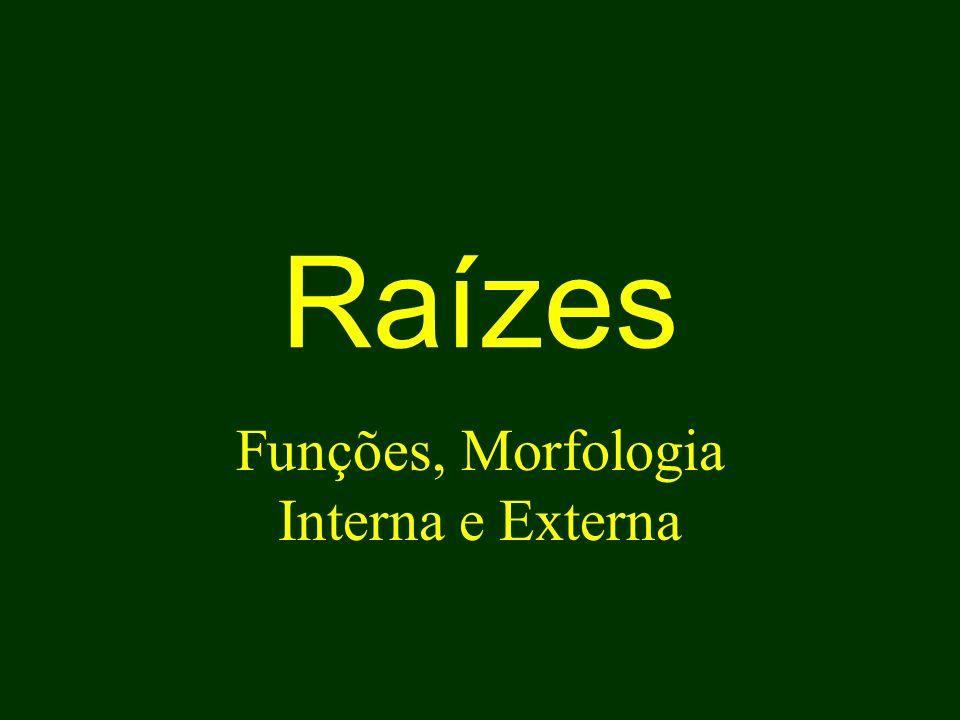Funções, Morfologia Interna e Externa