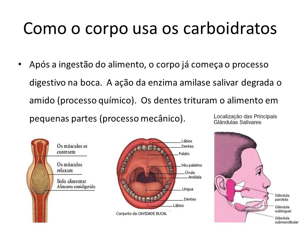 Como o corpo usa os carboidratos