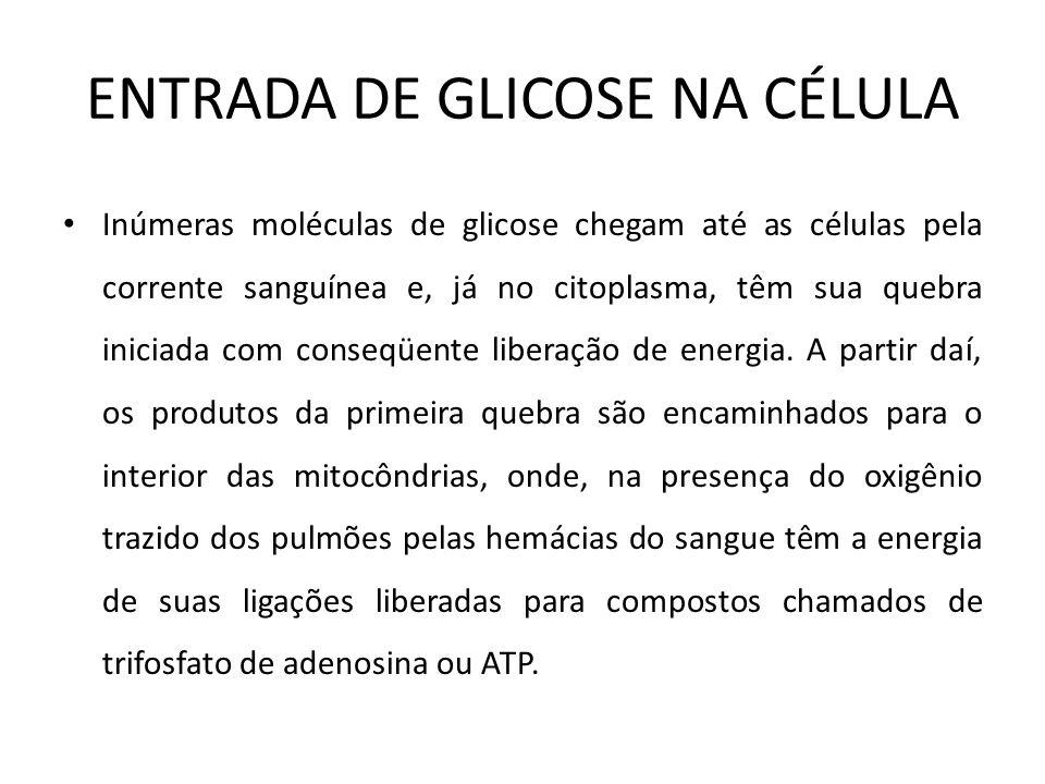 ENTRADA DE GLICOSE NA CÉLULA
