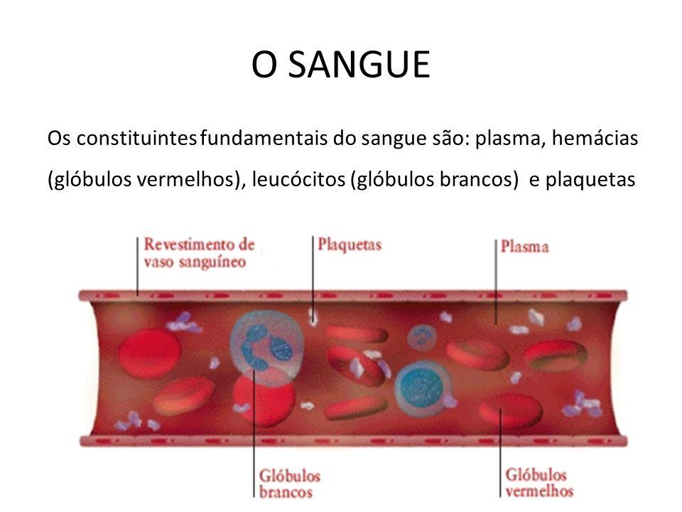 O SANGUE Os constituintes fundamentais do sangue são: plasma, hemácias (glóbulos vermelhos), leucócitos (glóbulos brancos) e plaquetas.