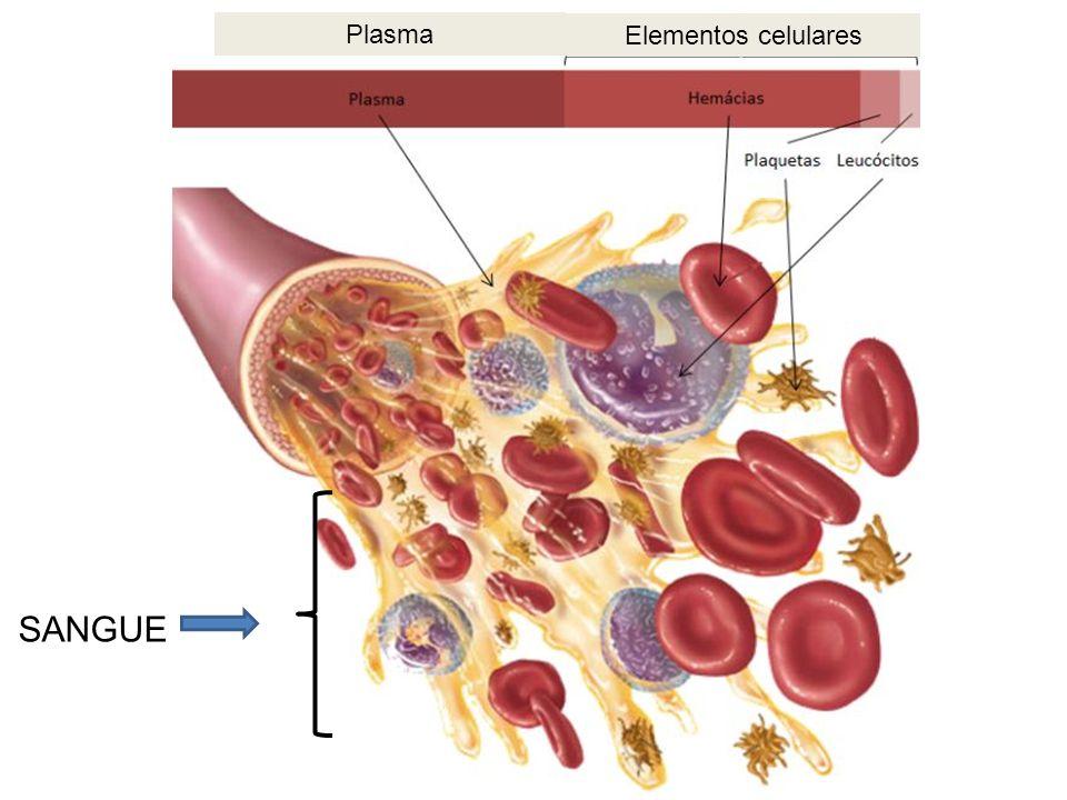 Plasma Elementos celulares SANGUE
