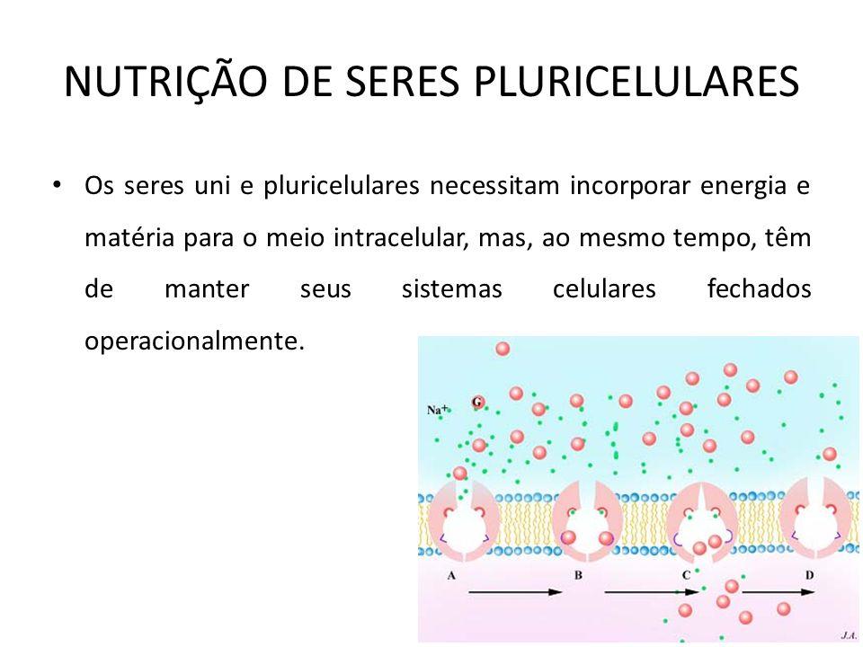 NUTRIÇÃO DE SERES PLURICELULARES