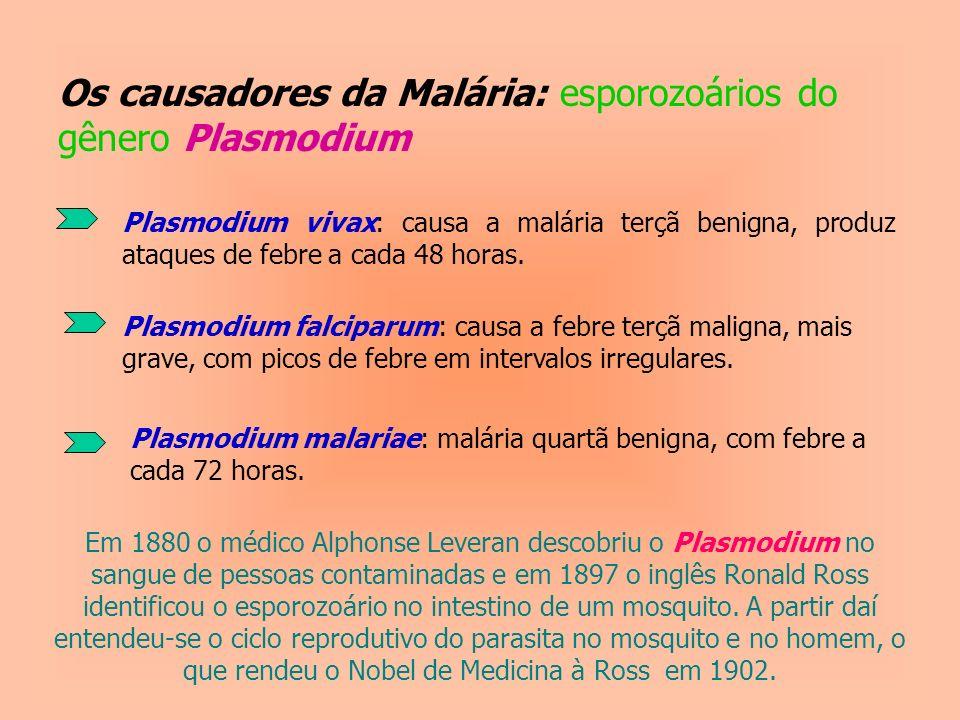 Os causadores da Malária: esporozoários do gênero Plasmodium