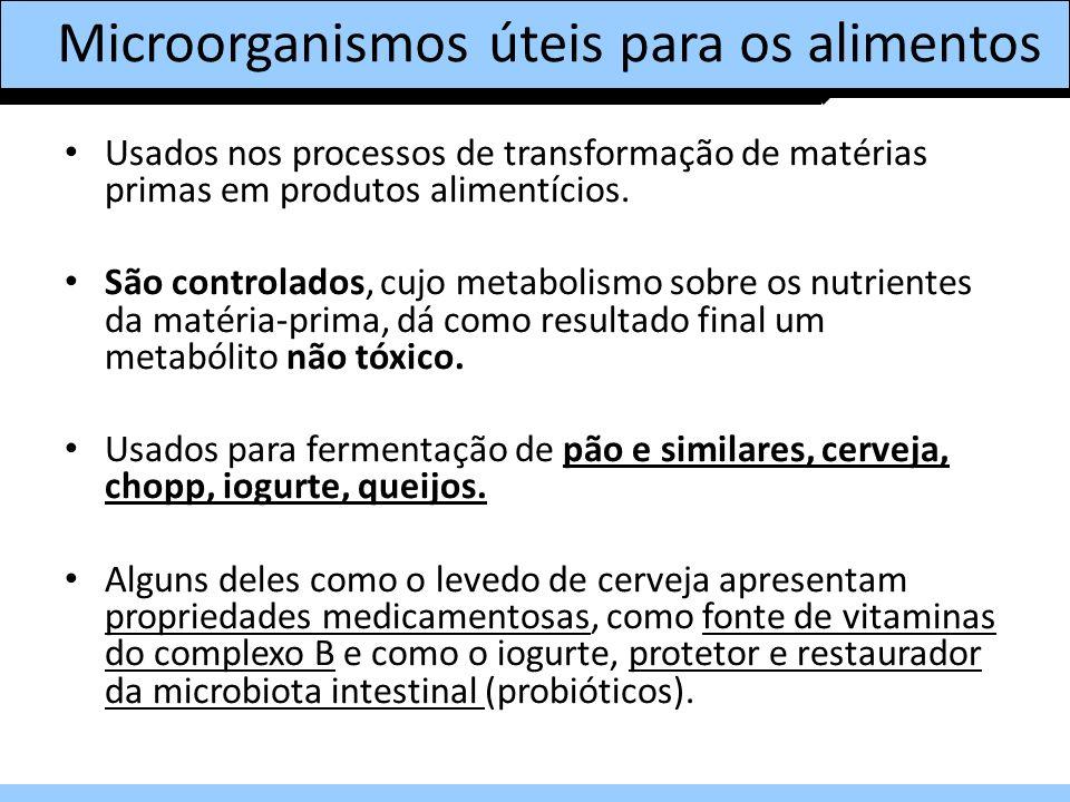 Microorganismos úteis para os alimentos