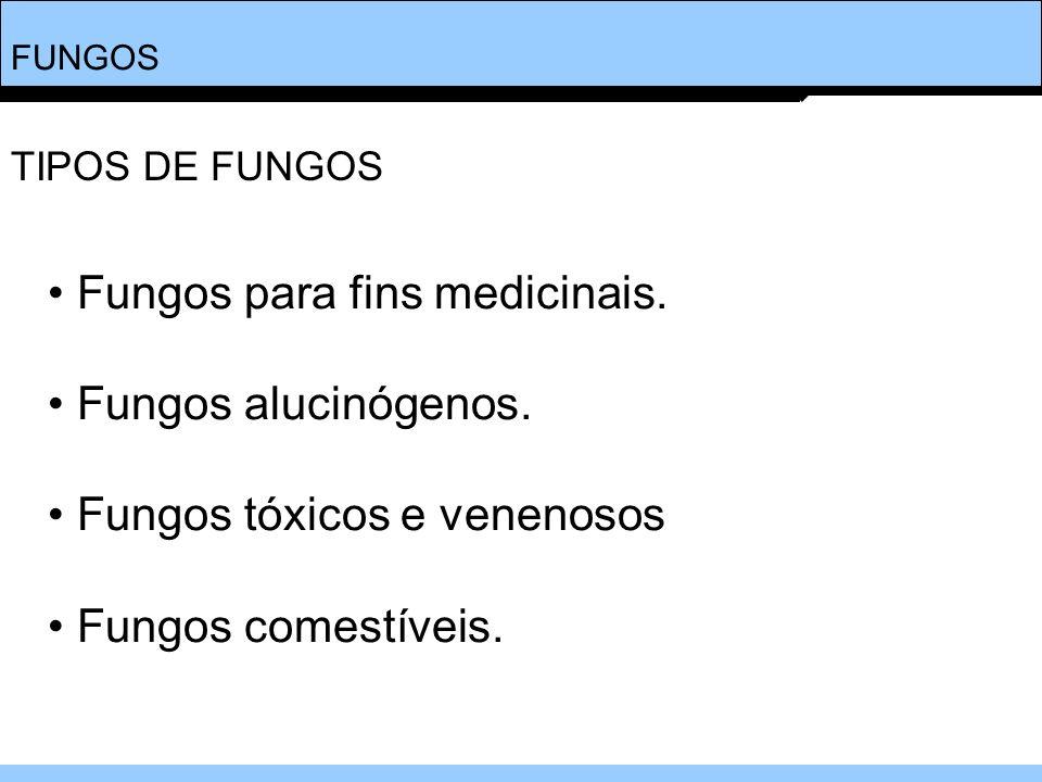 Fungos para fins medicinais. Fungos alucinógenos.