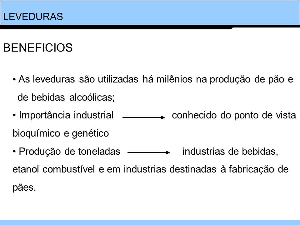 LEVEDURAS BENEFICIOS. As leveduras são utilizadas há milênios na produção de pão e. de bebidas alcoólicas;