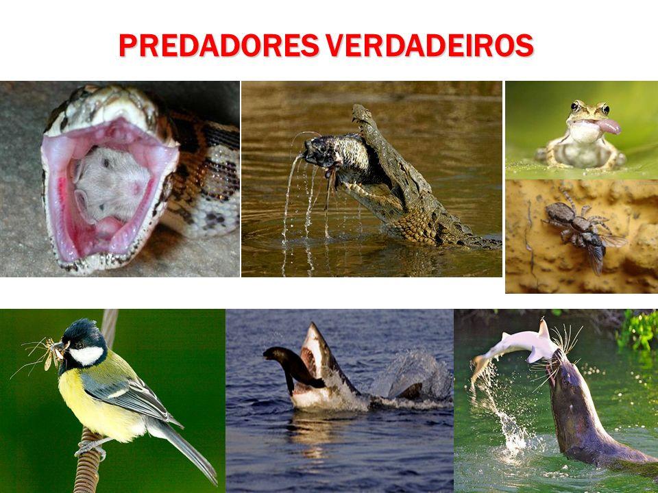 PREDADORES VERDADEIROS