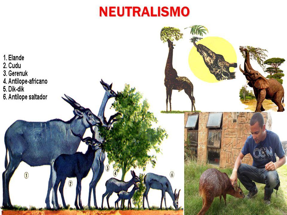 NEUTRALISMO