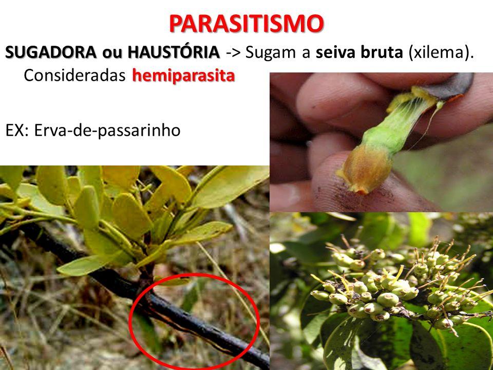 PARASITISMOSUGADORA ou HAUSTÓRIA -> Sugam a seiva bruta (xilema).