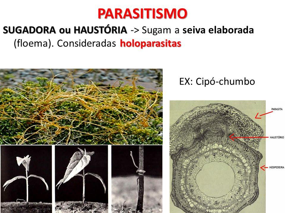 PARASITISMOSUGADORA ou HAUSTÓRIA -> Sugam a seiva elaborada (floema).