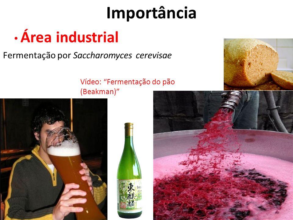 Importância Área industrial Fermentação por Saccharomyces cerevisae