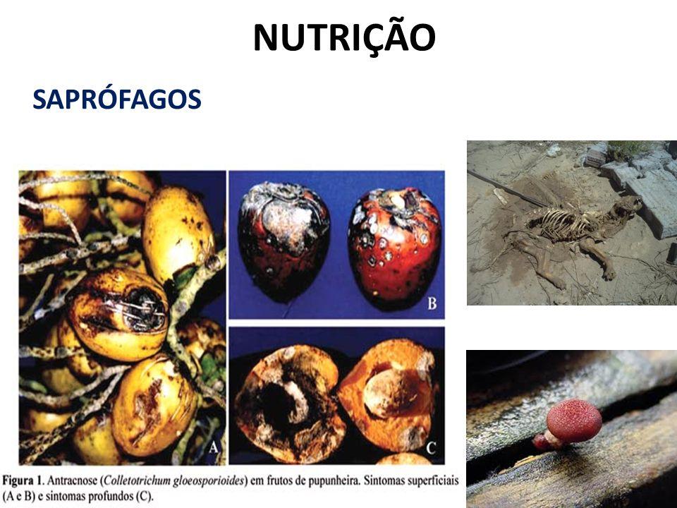 NUTRIÇÃO SAPRÓFAGOS