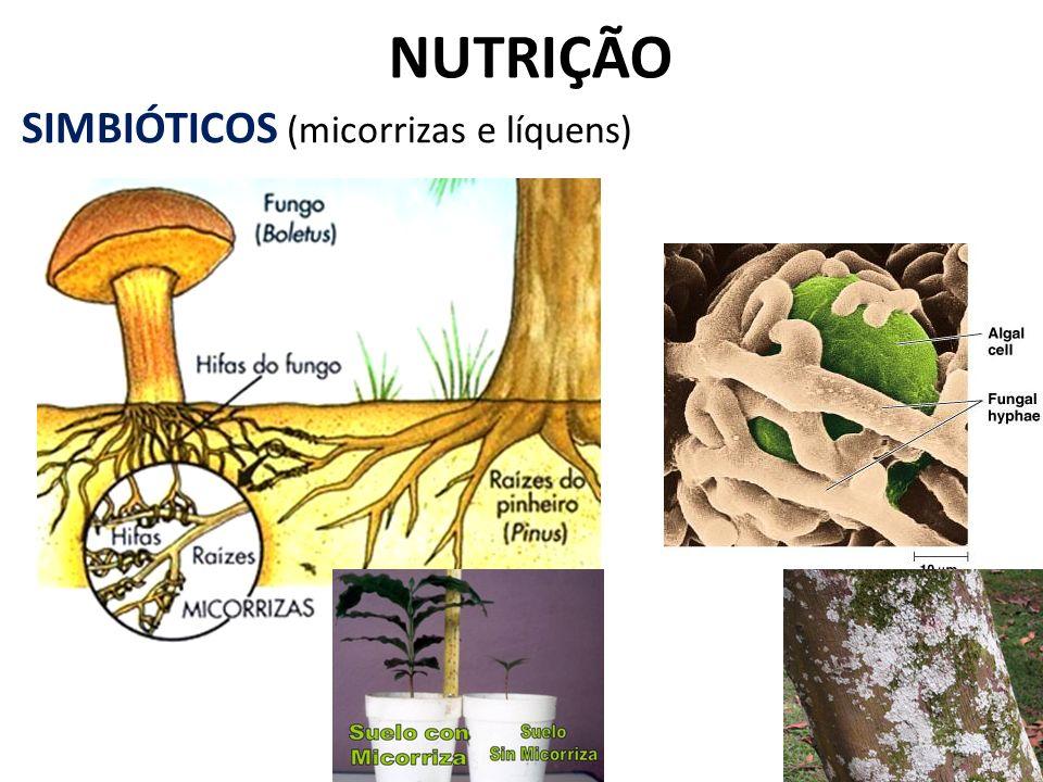 NUTRIÇÃO SIMBIÓTICOS (micorrizas e líquens)