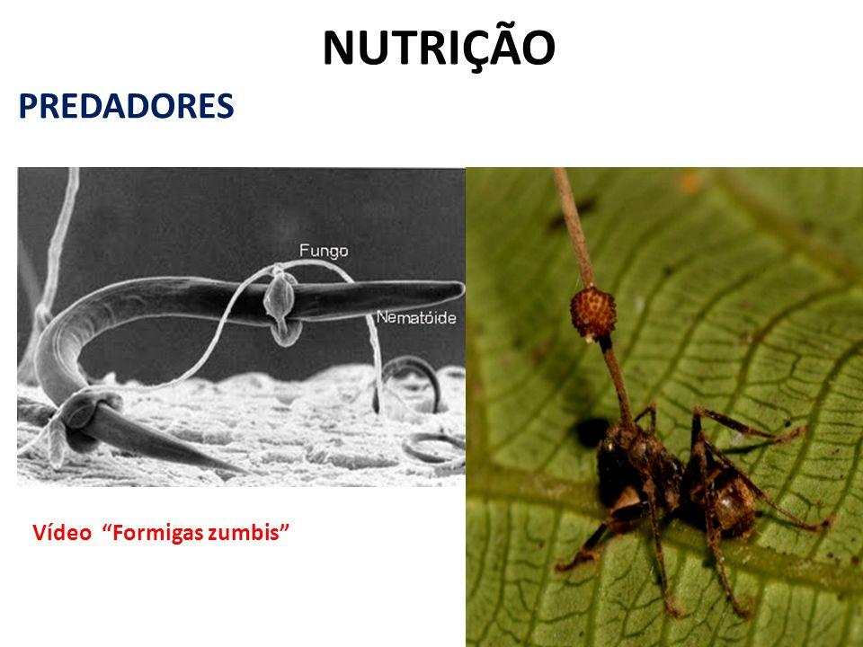 NUTRIÇÃO PREDADORES Vídeo Formigas zumbis