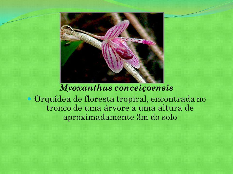 Myoxanthus conceiçoensis