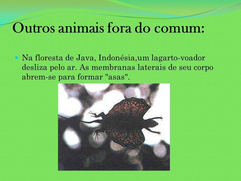 Outros animais fora do comum: