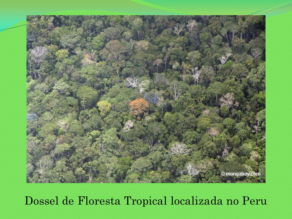 Dossel de Floresta Tropical localizada no Peru