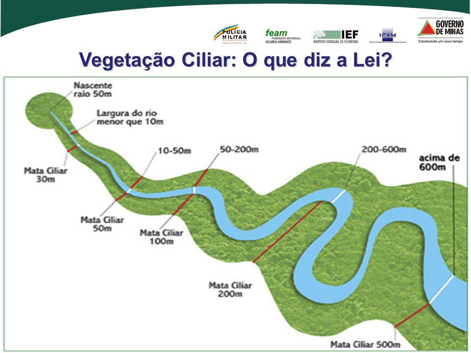 Vegetação Ciliar: O que diz a Lei
