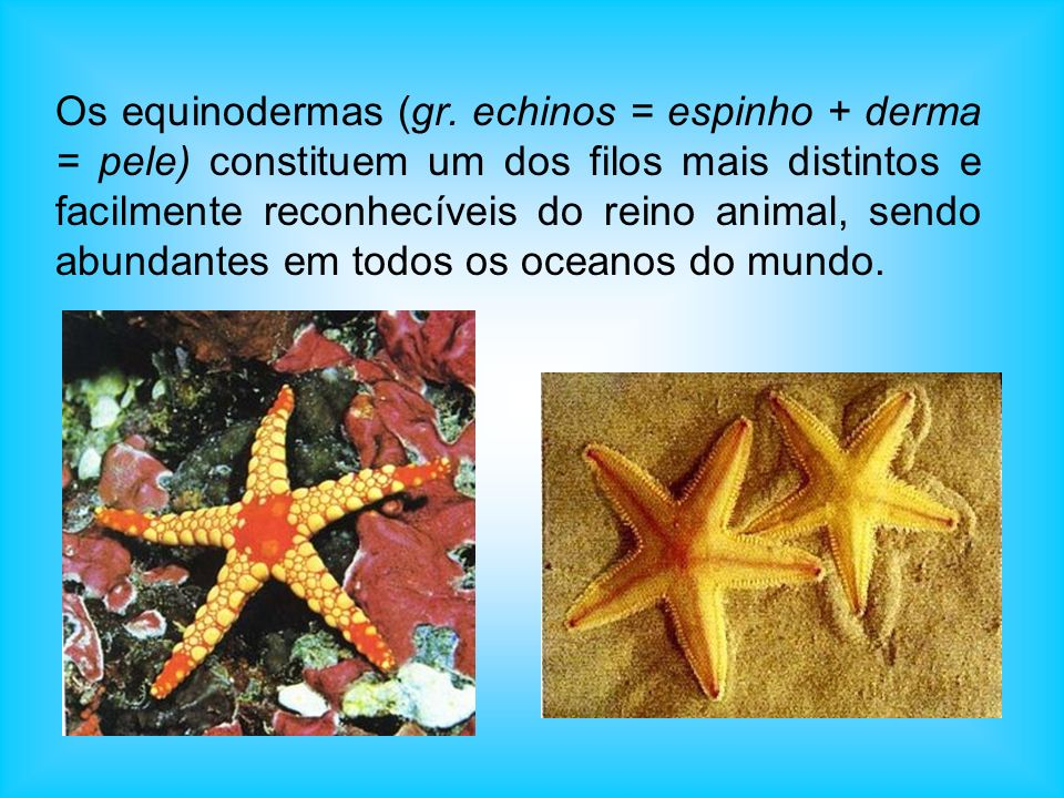 Os equinodermas (gr.