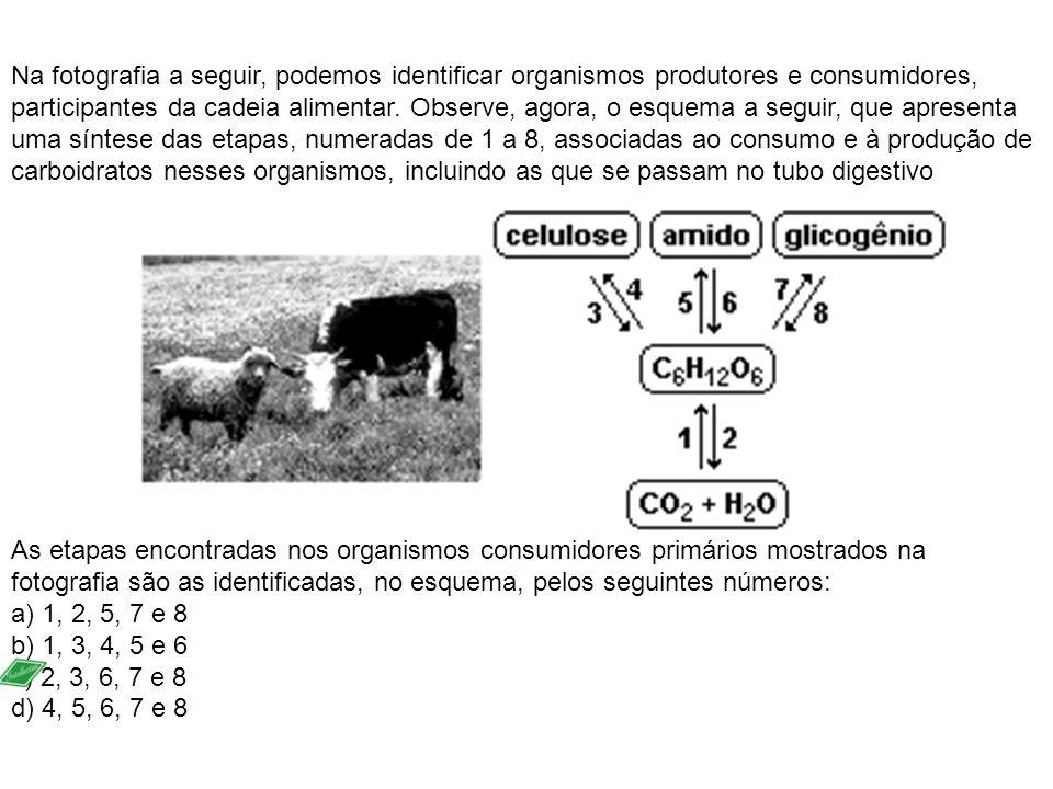 Na fotografia a seguir, podemos identificar organismos produtores e consumidores, participantes da cadeia alimentar. Observe, agora, o esquema a seguir, que apresenta uma síntese das etapas, numeradas de 1 a 8, associadas ao consumo e à produção de carboidratos nesses organismos, incluindo as que se passam no tubo digestivo