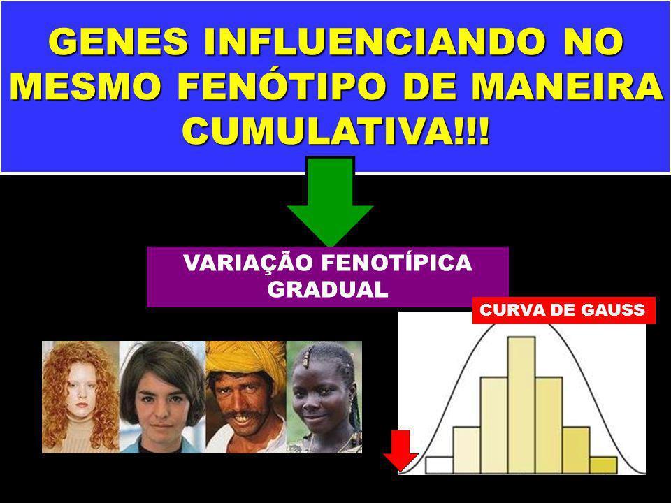 GENES INFLUENCIANDO NO MESMO FENÓTIPO DE MANEIRA CUMULATIVA!!!