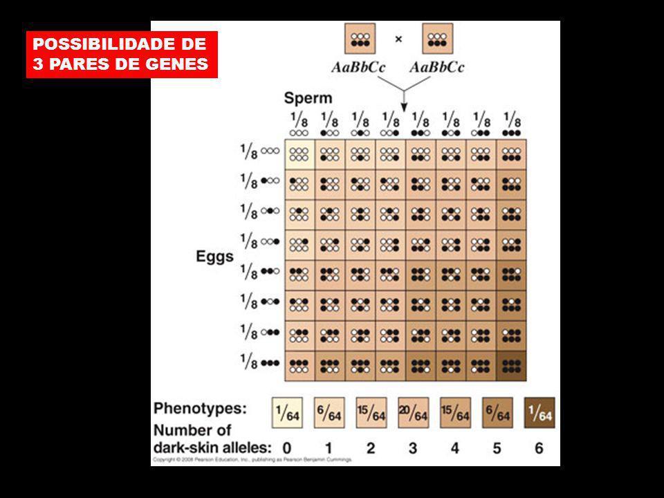 POSSIBILIDADE DE 3 PARES DE GENES