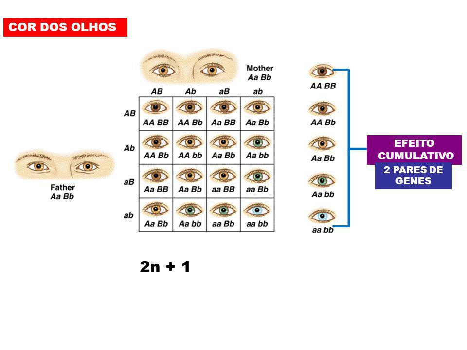 COR DOS OLHOS EFEITO CUMULATIVO 2 PARES DE GENES 2n + 1