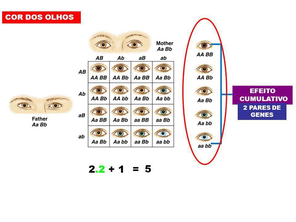COR DOS OLHOS EFEITO CUMULATIVO 2 PARES DE GENES 2.2 + 1 = 5