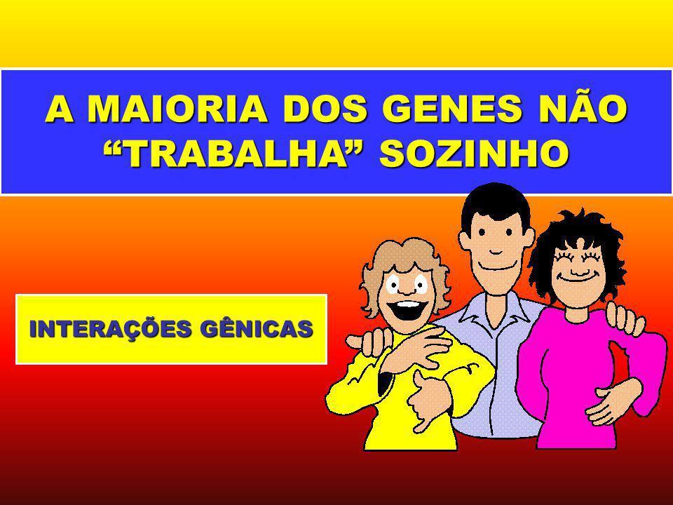 A MAIORIA DOS GENES NÃO TRABALHA SOZINHO