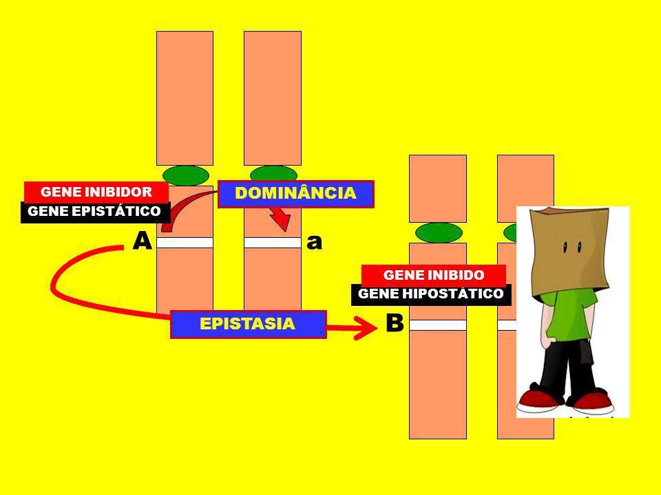 A a B b DOMINÂNCIA EPISTASIA GENE INIBIDOR GENE EPISTÁTICO