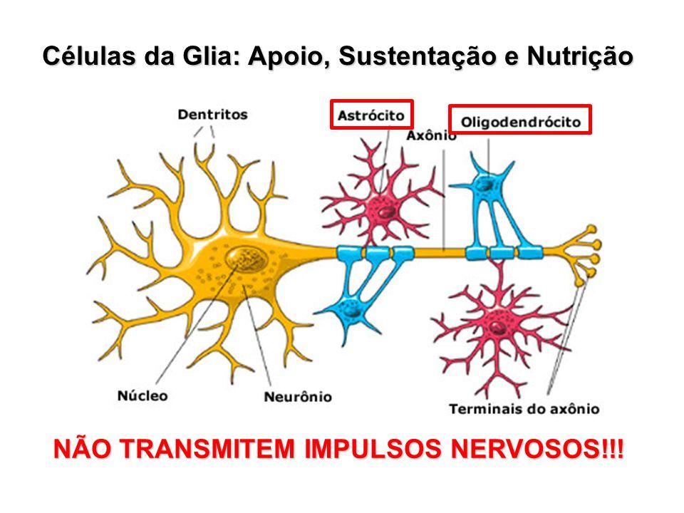 Células da Glia: Apoio, Sustentação e Nutrição