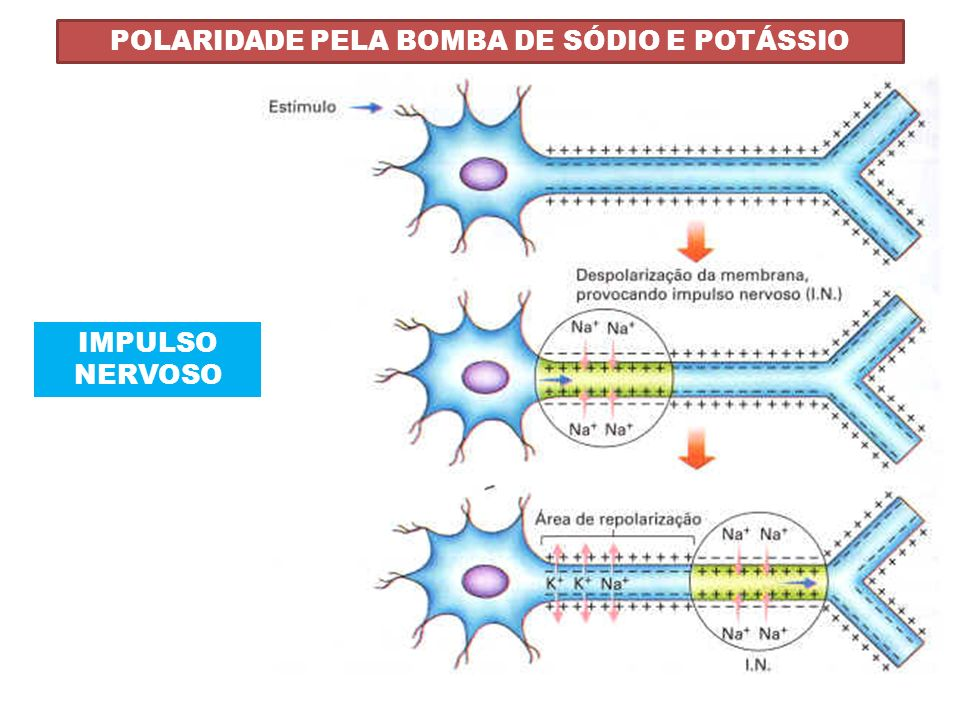 POLARIDADE PELA BOMBA DE SÓDIO E POTÁSSIO