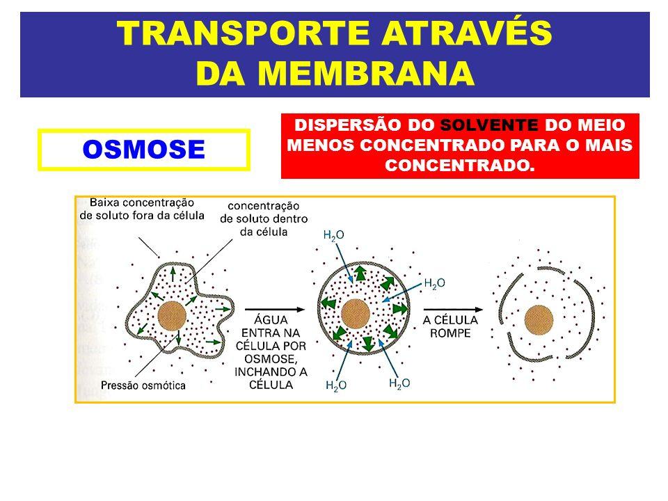 TRANSPORTE ATRAVÉS DA MEMBRANA