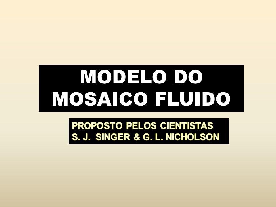 MODELO DO MOSAICO FLUIDO