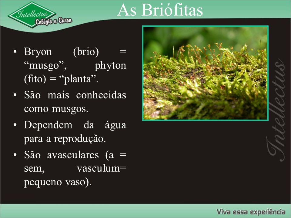 As Briófitas Bryon (brio) = musgo , phyton (fito) = planta .