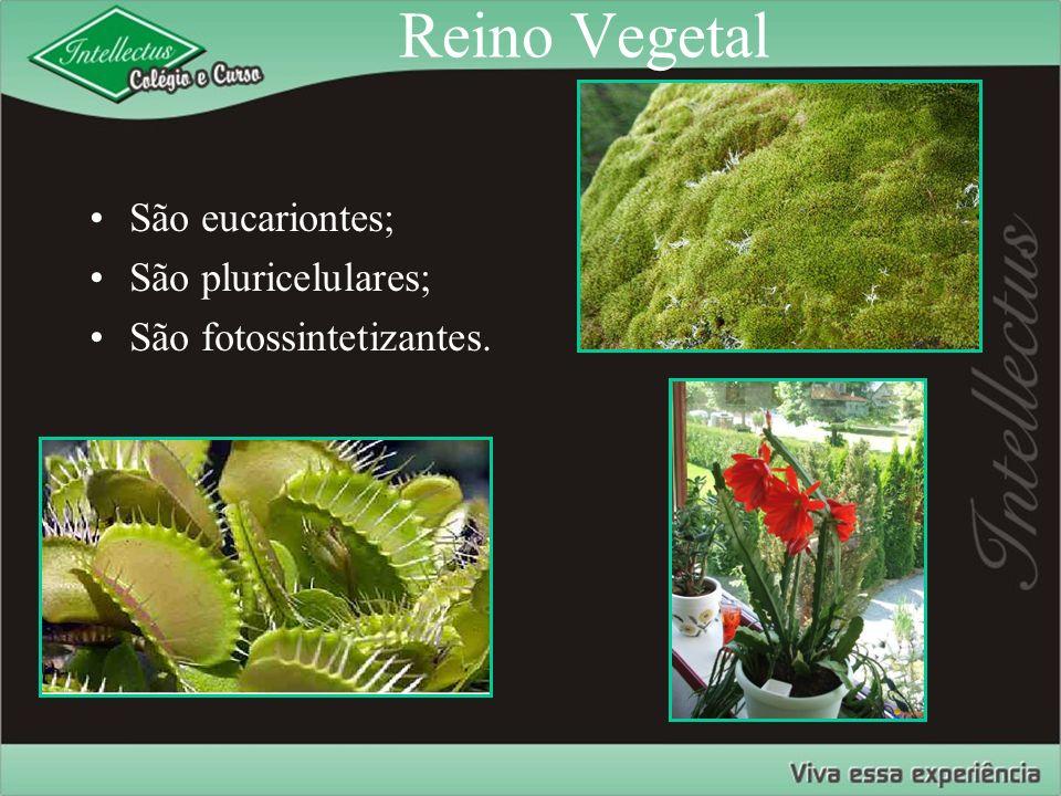 Reino Vegetal São eucariontes; São pluricelulares;