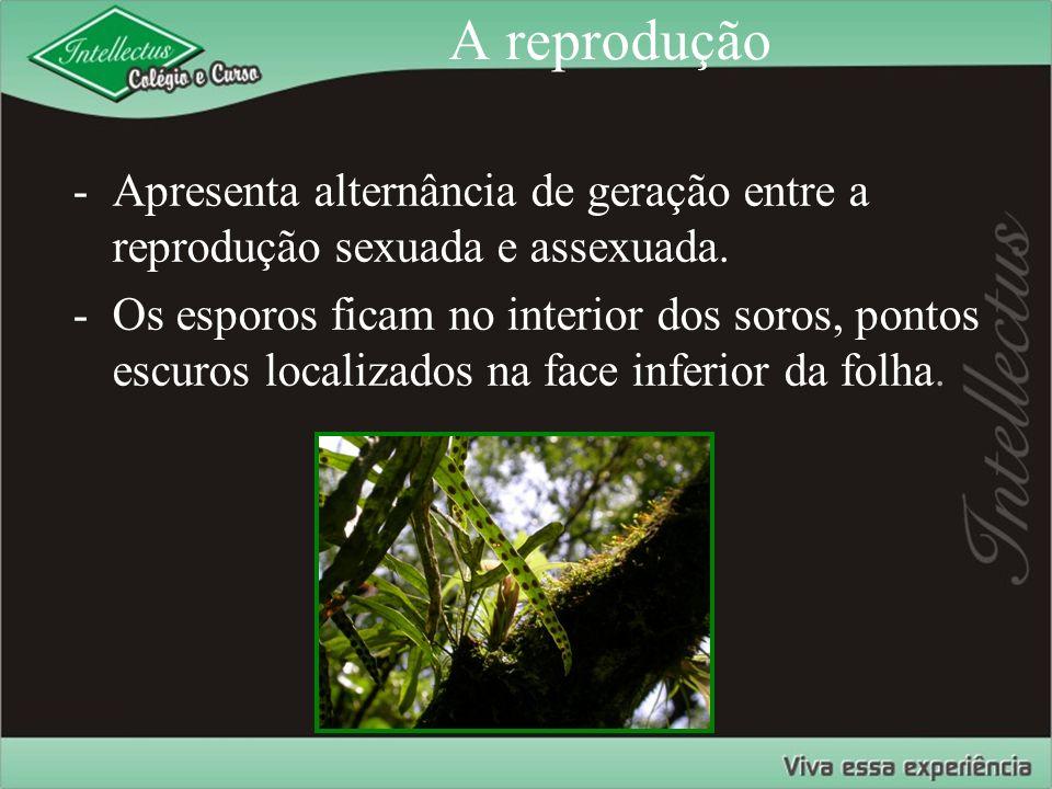 A reprodução Apresenta alternância de geração entre a reprodução sexuada e assexuada.