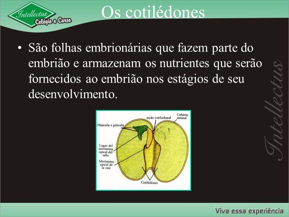 Os cotilédones