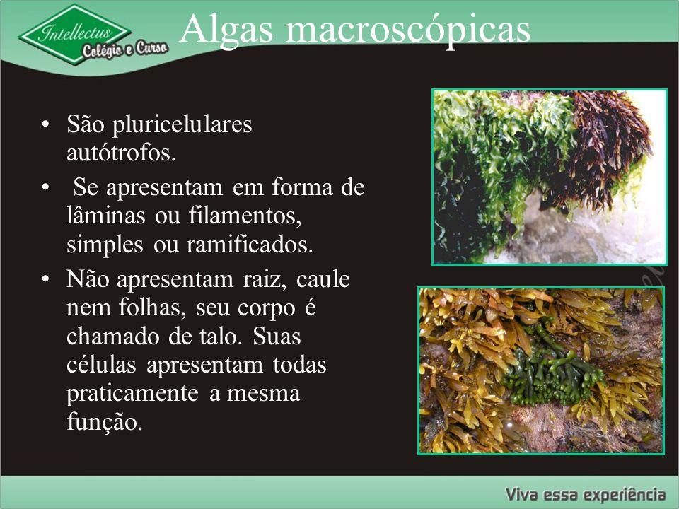 Algas macroscópicas São pluricelulares autótrofos.