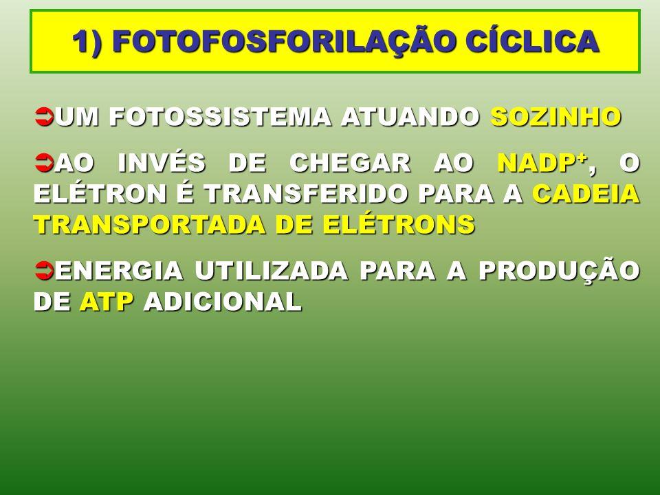1) FOTOFOSFORILAÇÃO CÍCLICA