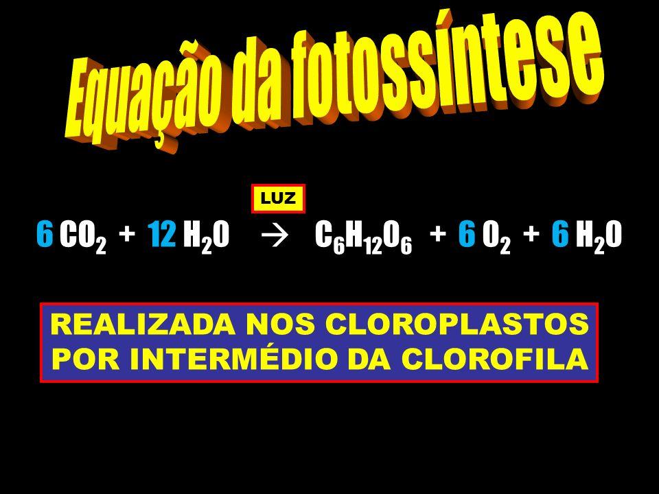 Equação da fotossíntese