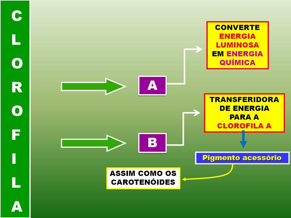 CLOROFILA A B CONVERTE ENERGIA LUMINOSA EM ENERGIA QUÍMICA