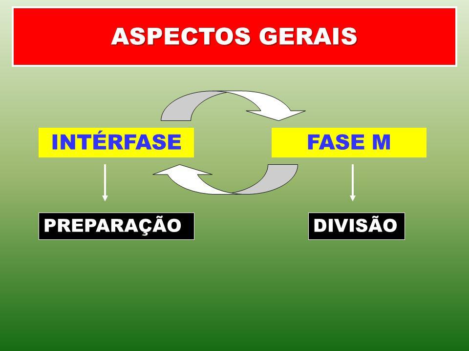ASPECTOS GERAIS INTÉRFASE FASE M PREPARAÇÃO DIVISÃO