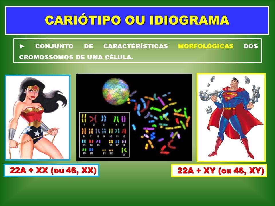 CARIÓTIPO OU IDIOGRAMA