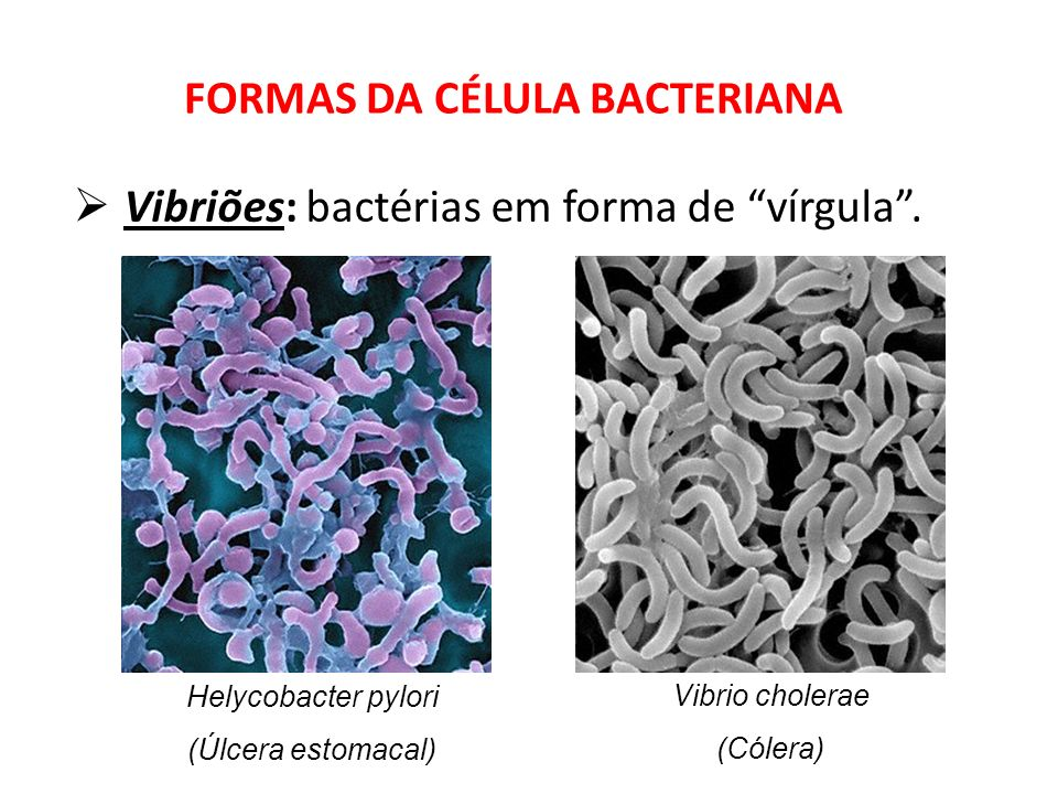 FORMAS DA CÉLULA BACTERIANA