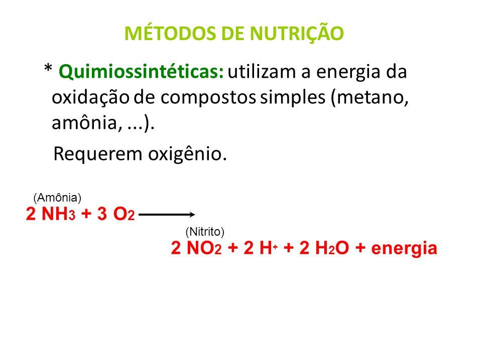 MÉTODOS DE NUTRIÇÃO * Quimiossintéticas: utilizam a energia da oxidação de compostos simples (metano, amônia, ...).