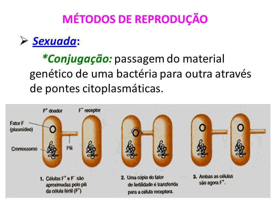 MÉTODOS DE REPRODUÇÃO Sexuada: *Conjugação: passagem do material genético de uma bactéria para outra através de pontes citoplasmáticas.