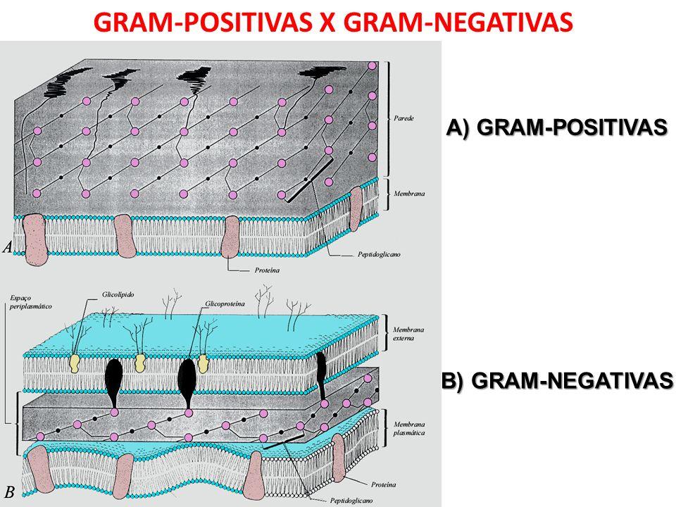 GRAM-POSITIVAS X GRAM-NEGATIVAS