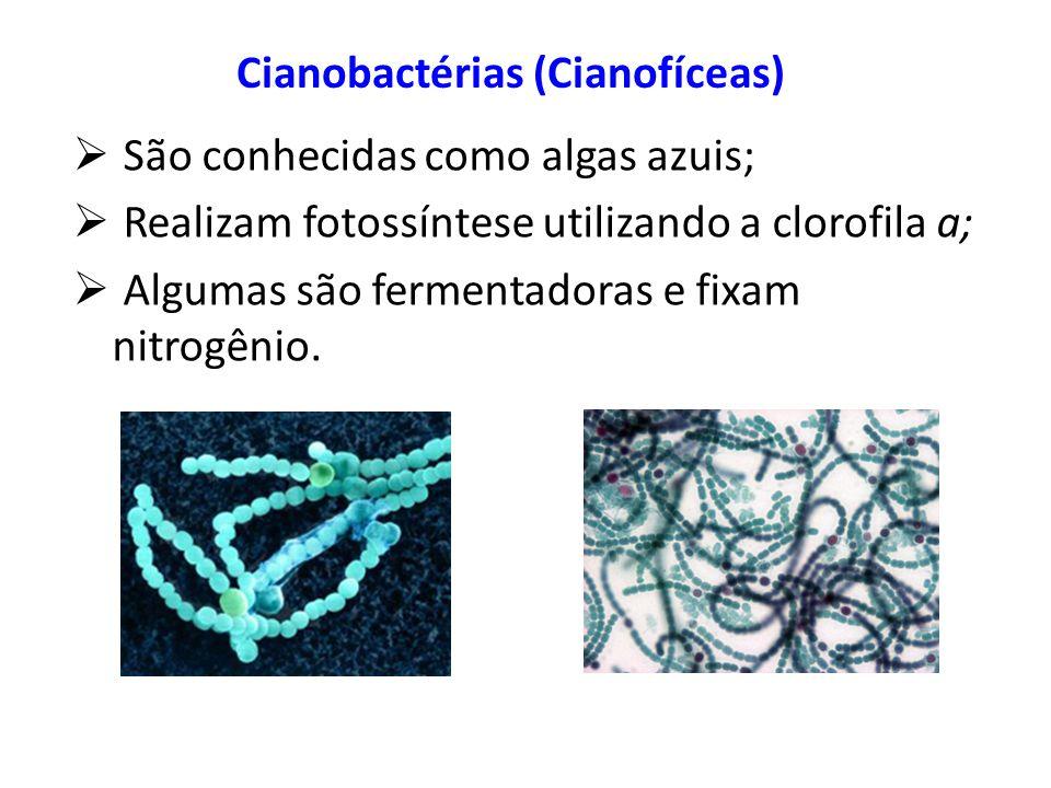 Cianobactérias (Cianofíceas)
